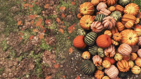 Close-up top view of various colorful autumn pumpkins piled on ground at outdoor farmers market for Thanksgiving or Halloween