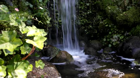 folha : Small beautiful waterfall in the forest - sound