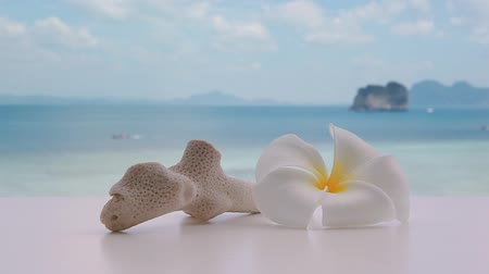Plumeria frangipani flower with coral stone on tropical island in Thailand, Andaman sea, boats passing in background. Stok Video