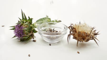 silybum : Dried and fresh Milk thistle seeds falling in glass bowl. Milk thistle blossom and seeds. Isolated on white background