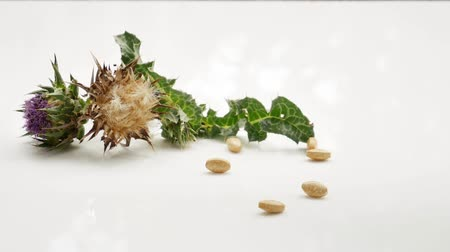 silybum : Milk thistle pills falling on white surface. Milk thistle plants and pills. Isolated on white background.