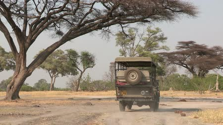 afrika : Young couple on game drive vehicle on safari in Botswana,Africa