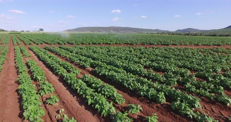 irrigate : Aerial view of vegetables being irrigated Stock Footage