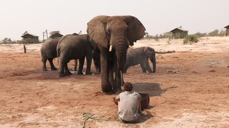 vacation destination : Man forms unusual bond with injured wild elephant and gives it water