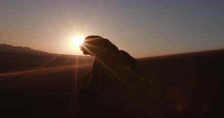 gepard : 4K Cheetah in silhouette against setting sun of the Namib desert Wideo