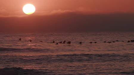 coulds : Birds flying in slow motion at sunset over the sea