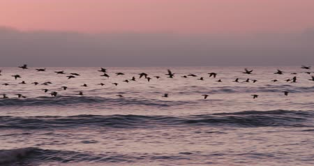 coulds : Birds flying at sunset over the sea