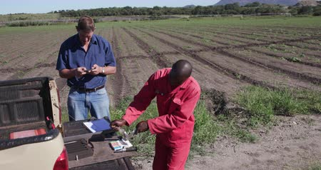 afrika : 4K Agronomistfarmer checking nutrient levels in the vegetable leaves