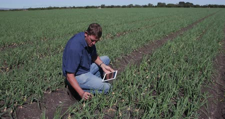 çiftçi : 4K Agronomistfarmer inspecting field of onion plants using a tablet