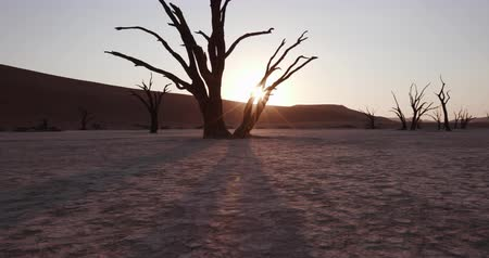 namibya : 4K moving shot of sun setting behind dead trees in Dead vlei inside the Namib-Naukluft National Park Stok Video
