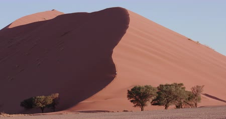 дюна : 4K view of male tourist running down a sand dune  inside the Namib-Naukluft National Park Стоковые видеозаписи