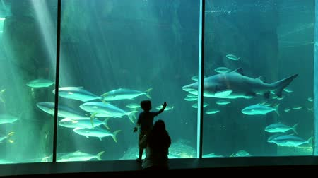 holiday makers : Mother and child in silhouette looking at sharks and other fish,  Two Oceans Aquarium, Cape Town,South Africa