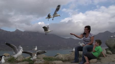 coulds : Woman and child feeding seagulls.Hartlaubs gull, Cape Town, South Africa