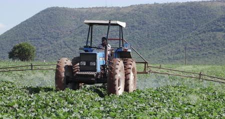 trator : Tractor spraying vegetables with insecticide Vídeos