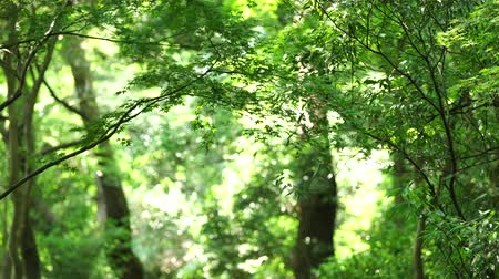 dark green : Woods Stock Footage