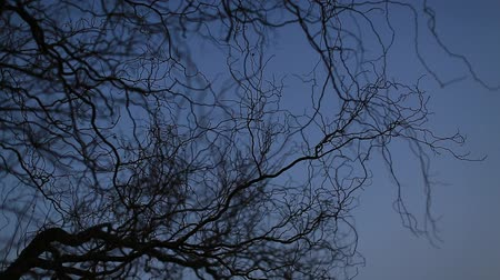 Branches and sky in winter evening Stock Footage