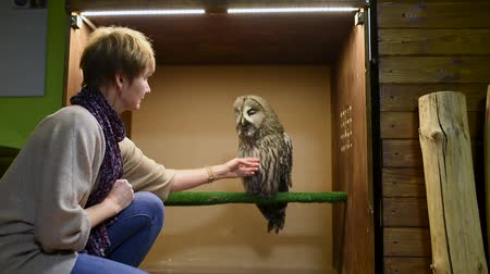 observação de aves : Woman stroking tawny owl. Contact zoo. Birding of wild birds in captivity.
