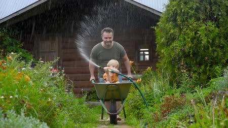 locsolás : Happy little boy having fun in a wheelbarrow pushing by dad in domestic garden on warm sunny day. Child watering plants from a hose. Active outdoors games for kids in summer. Stock mozgókép