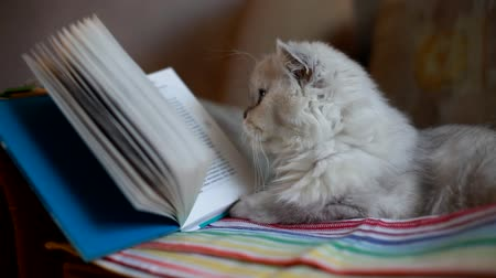 schoolbook : White cat reading a book