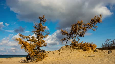 relict : Lake Baikal beach. Siberia. Blue sky, moving clouds, sand, trees. Time lapse Stock Footage