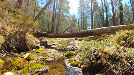 liken : Mountain stream in the forest