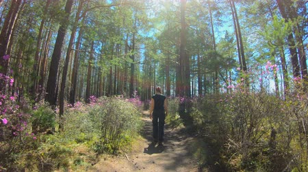 woodland : Girl walks along a forest trail among the pink flowers of Rhododendron