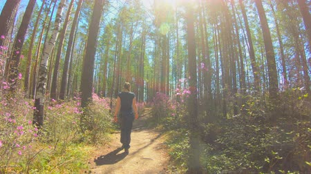 rhododendron : Girl walks along a forest trail among the pink flowers of Rhododendron timelapse