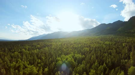 forest preservation : Aerial View. Flying over beautiful sunny forest. Aerial camera shot. Mountains Stock Footage