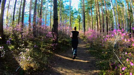 rhododendron : Girl runs along a forest path in a sunny day, among the trees and pink flowers of rhododendron, and between the woods the sun shines. Walking in the forest. Slow motion Stock Footage