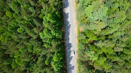 bird's eye view : Aerial view of white car driving on road in forest. Slow Stock Footage