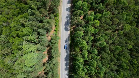 bird's eye view : Aerial view of black car driving on road in forest