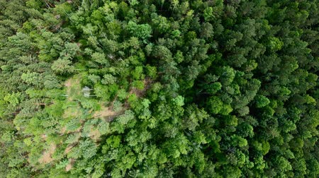 Drone rising up above green forest. Aerial vertical shot. Birds eye view Стоковые видеозаписи