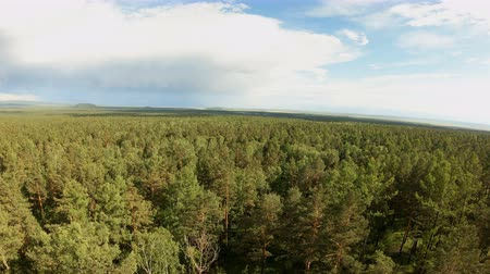 Aerial shot of a mixed forest. Birds eye view