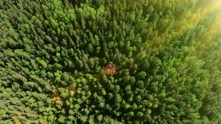 Drone flying over beautiful sunny green forest. Aerial shot. Flare, bright light Стоковые видеозаписи