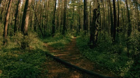 wooden path : Running along the forest path. POV steadicam shot