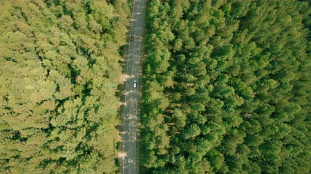 Aerial drone shot over the forest road. Drone flies forward above the road, cars Стоковые видеозаписи