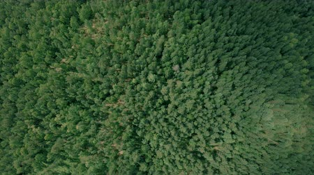 Aerial drone shot over the forest. Drone slowly flies forward