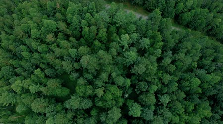 Aerial drone shot over the forest. Drone flies forward above the trees and road