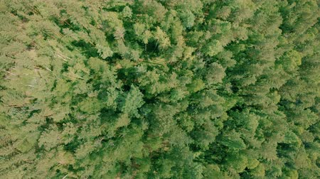 Aerial drone shot over the forest. Drone hovering above the trees