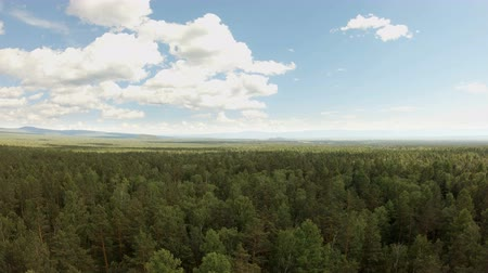 Aerial drone shot over the forest. Drone flies forward above the treetops Стоковые видеозаписи