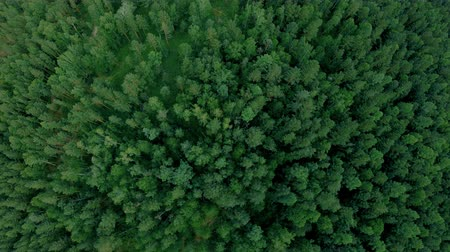 Aerial drone shot over the forest. Drone flies down and rotates Стоковые видеозаписи