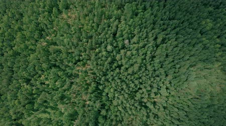 Aerial drone shot over the forest. Drone flies forward Стоковые видеозаписи