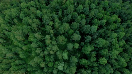 zálesí : Aerial drone shot over the forest. Drone flies forward above the trees and road