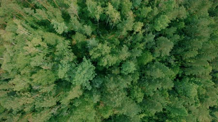 Aerial drone shot over the forest. Drone rise up