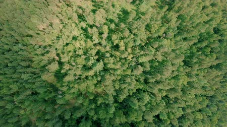 konzervace : Aerial drone shot over the forest. Drone rise up and rotates