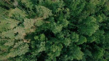 Aerial drone shot over the forest. Drone flies forward above the trees Стоковые видеозаписи
