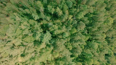 konzervace : Aerial drone shot over the forest. Drone rise up