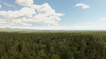 forest preservation : Aerial drone shot over the forest. Drone flies forward above the treetops Stock Footage