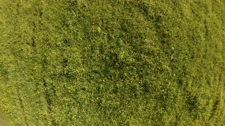 mouchy : Drone hovering and rotates above a green field with summer herbs and flowers. Aerial vertical shot of green grass and yellow wild flowers in the meadow