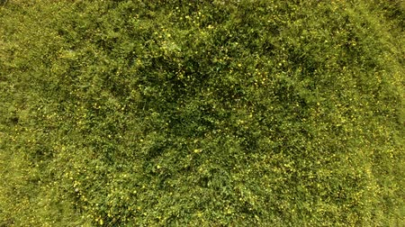 takes : Drone rise up above a green field with summer herbs and flowers. Aerial vertical shot of green grass and yellow wild flowers in the meadow